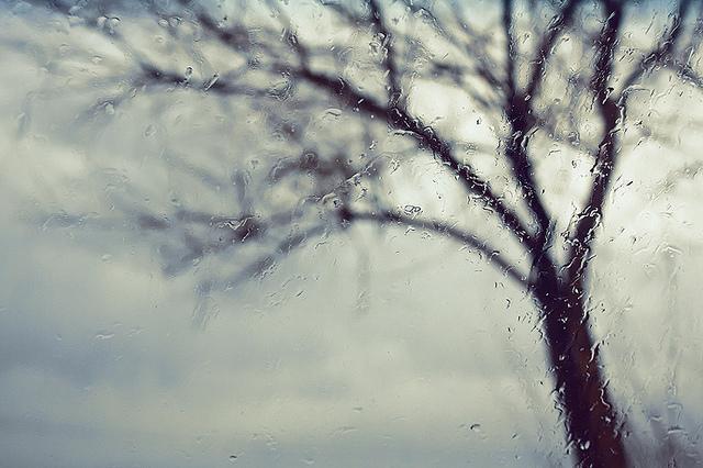 Grief by Seyed Mostafa Zamani